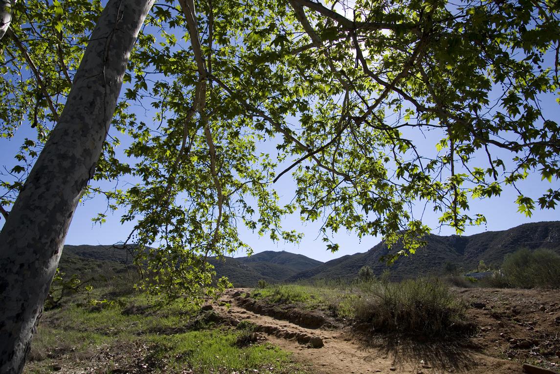 Cowles Trail_11