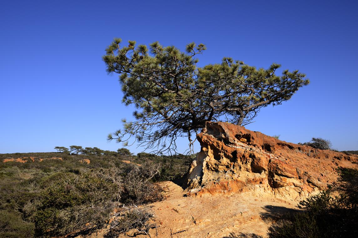 Torrey Pines_2925